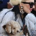 صور Lady Gaga Angered PETA spl425589_009.jpg
